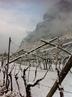 vigneto chardonnay ischia