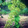 Primavera e ripresa vegetativa